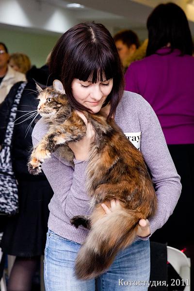 Кошки породы мейн кун, Волгоград